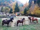 1 ден конна езда за начинаещи или напреднали за 1, 4 или 8 човека + обяд на открито в Родопите около гр. Смолян от Конна езда Ризов