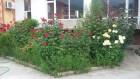 Лято до Асеновград! Нощувка на човек със закуска и вечеря + басейн от комплекс Еверест, с. Червен, снимка 7