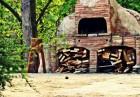Нощувка на човек със закуска и вечеря + басейн в Парк хотел Бриз***, Златни пясъци! Дете до 12г. - БЕЗПЛАТНО!, снимка 25