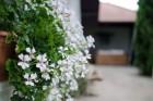 Нощувка за 8, 10 или 13 човека + просторен двор, трапезария и други удобства в къщи Костел край Елена - с. Костел, снимка 5
