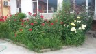 Лято до Асеновград! Нощувка на човек със закуска и вечеря + басейн от комплекс Еверест, с. Червен, снимка 3