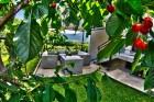 Нощувка за до 11 човека + сезонен басейн, механа, барбекю и просторен двор в къща Крисиели край Кюстендил - с. Горна Брестница, снимка 3