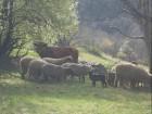 Нощувка за 14 човека + панорамна механа и барбекю в къща Росна вила край Елена - с. Росно, снимка 26