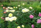 Нощувка за 8 човека + барбекю, китен двор с градина и още удобства в къща Маришница в Априлци, снимка 24