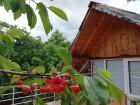 Нощувка за до 8 човека + сезонен басейн, механа и барбекю в Къщата с трите веранди в Берковица, снимка 3