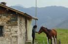 Почивка и езда край Чепеларе! Нощувка за един човек с изхранване в Ранчо Диви Родопи в с. Здравец!, снимка 14