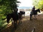 """1 или 2 часа конна езда от Конна База """"Св. Иван Рилски"""", с. Владая, до София, снимка 8"""
