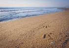 Късно лято на 1-ва линия в Шкорпиловци! Нощувка за до 5-ма в бунгала Морски Дюни, снимка 15