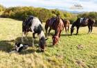 90-минутен планински конен преход от Планинска конна база Своге, снимка 3