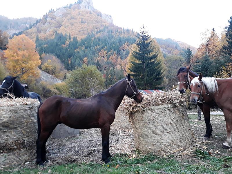 1 ден конна езда за начинаещи или напреднали за 1, 4 или 8 човека + обяд на открито в Родопите около гр. Смолян от Конна езда Ризов, снимка 2