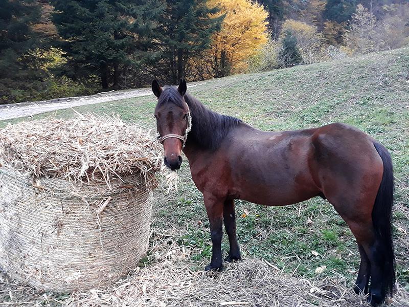 1 ден конна езда за начинаещи или напреднали за 1, 4 или 8 човека + обяд на открито в Родопите около гр. Смолян от Конна езда Ризов, снимка 3