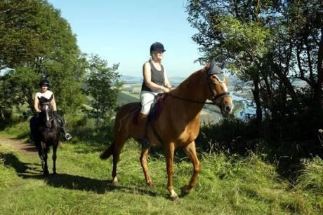 45 минути разходка на кон от конна база София – Юг, Драгалевци, снимка 3