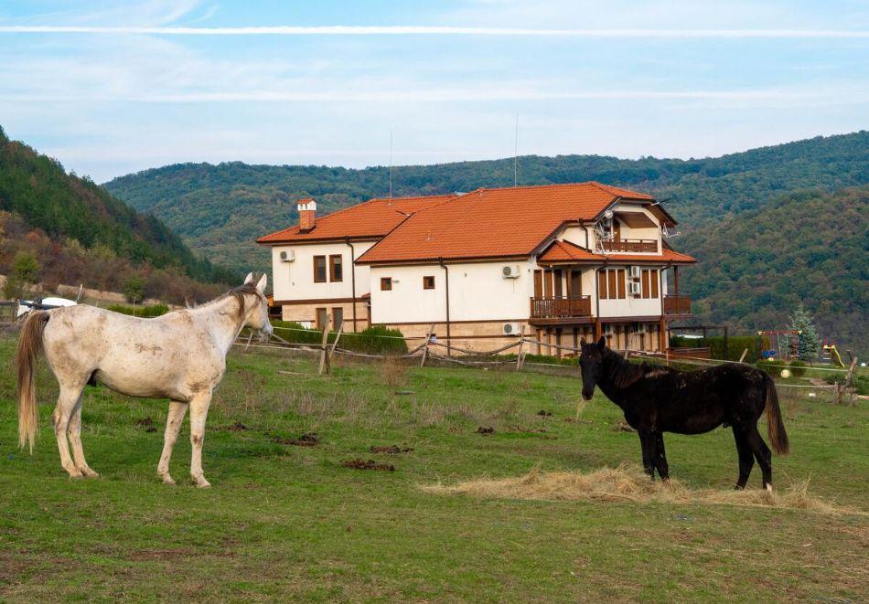 Нощувка на човек със закуска + конна езда в къща за гости Рая, с. Кормянско на 3 км. от Севлиево, снимка 11