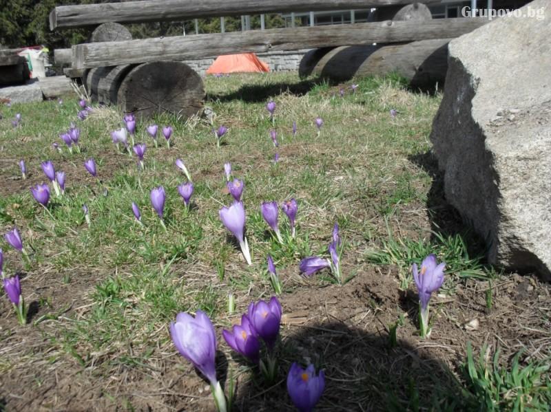 Хижа Звездица, природен парк Витоша, снимка 7