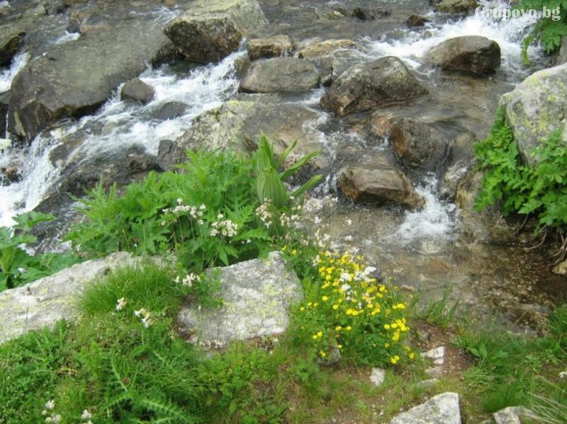 Хижа Звездица, природен парк Витоша, снимка 8